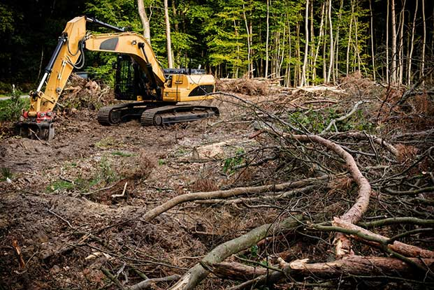 excavator and cleared trees on the ground
