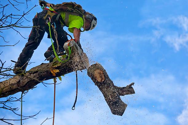tree services savannah ga