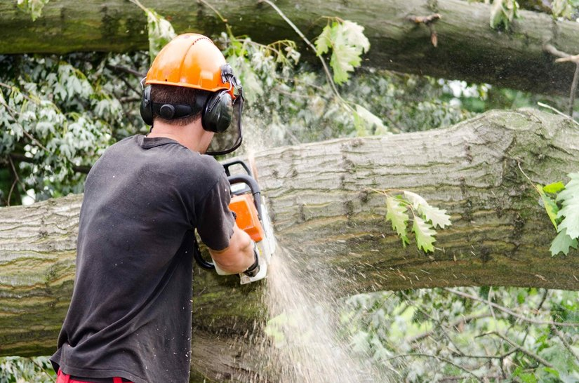 lumberjack cutting through a fallen tree with a chainsaw