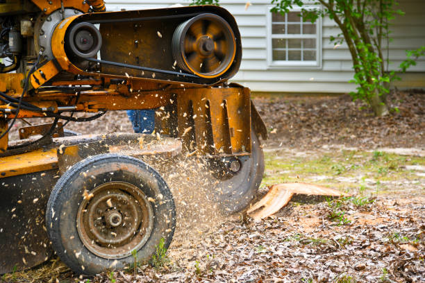 stump grinder grinding a stump from a removed tree