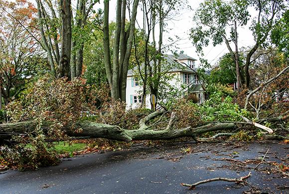 tree that has fallen in a driveway