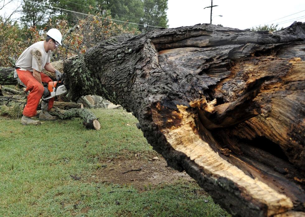 man cutting up fallen tree