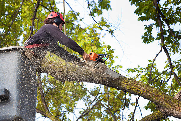 Man cutting branch with chainsaw in a bucket truck