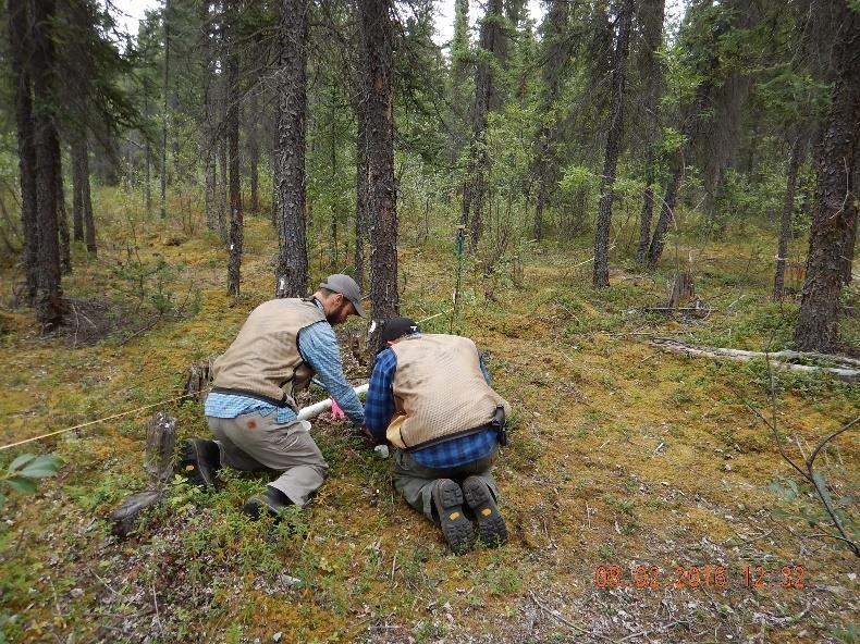 tree researchers