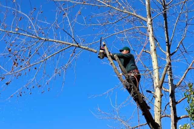 savanah ga tree removal