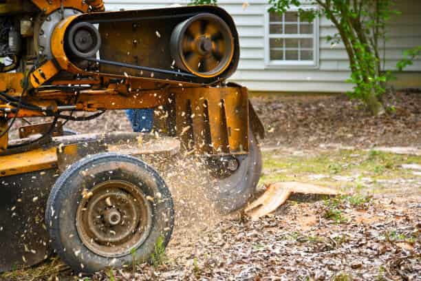 stump grinding savannah ga