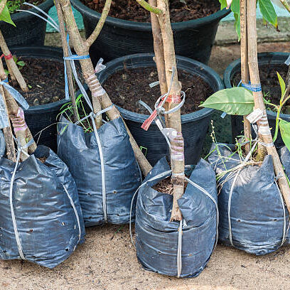 trees in pot bags