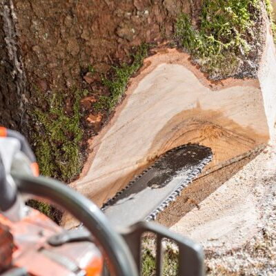 chainsaw cutting through a tree trunk