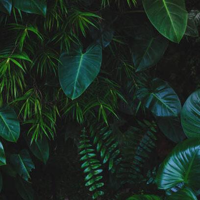 dark green leaves shrubbery