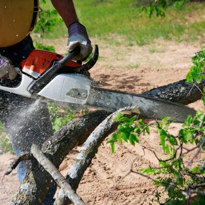 tree cutting of savannah ga