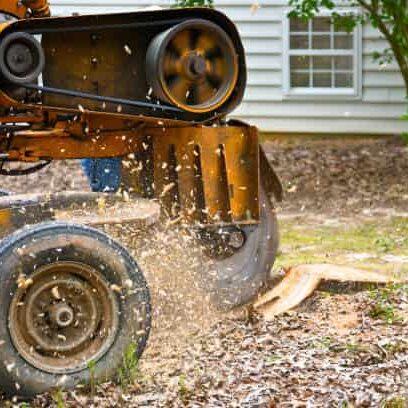 tree stump removal savannah