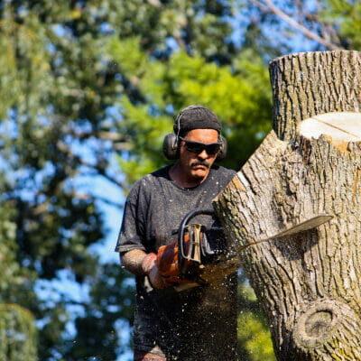 tree cutting savannah