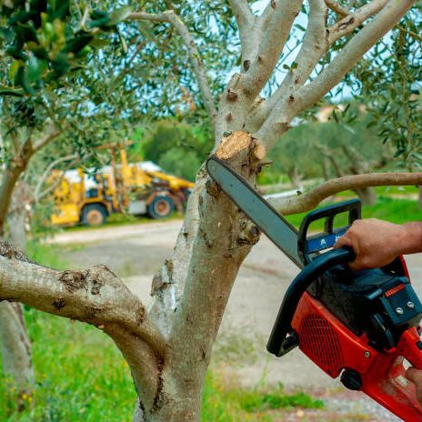 tree pruning savannah